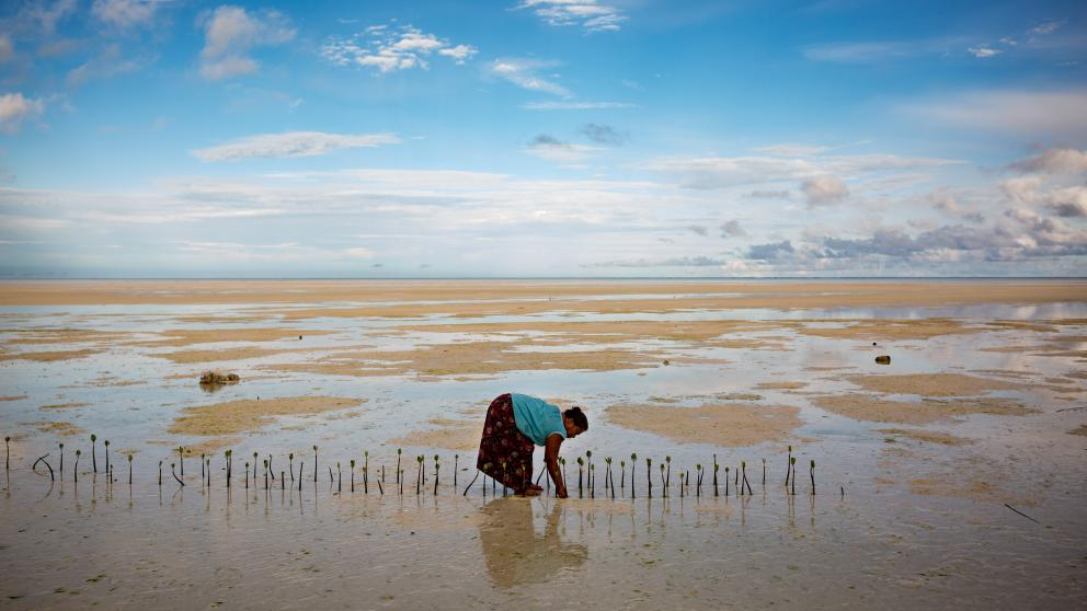 In the absence of effective climate protection measures, many small island nations are in danger: Rising sea levels pose a threat to life on the Pacific Island of North Tarawa. Here we see a woman planting mangroves to prevent coastal erosion.