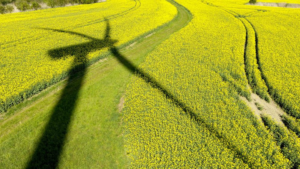 A wind turbine casts its shadow over a rapeseed field in Randowhöhe, Brandenburg.