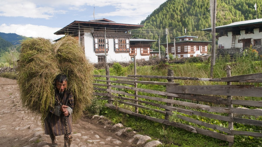 Haa Valley, Bhutan: A farmer walks down a rural pathway carrying a load of rice stalks. He wears a gho, the traditional men's garment. © istock/leezsnow