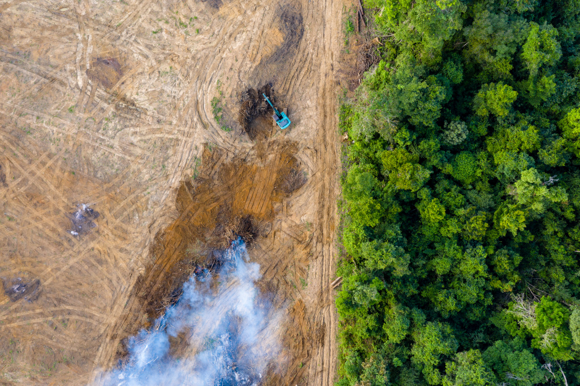 Deforestation clears the way for new rubber and oil palm plantations.