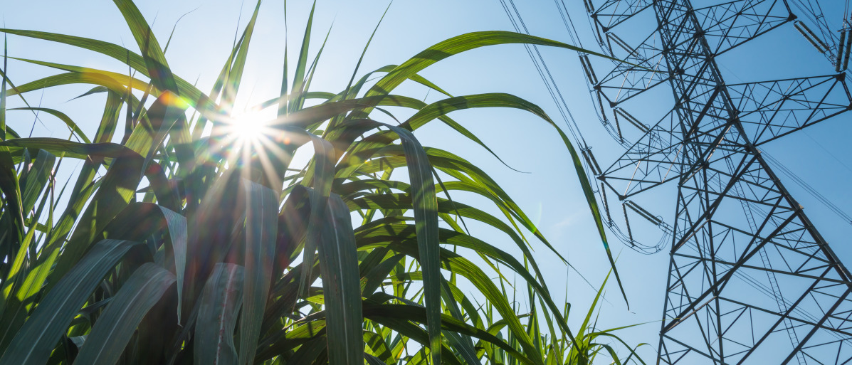 Brazil produces not only sugar but also biofuel from sugar cane.