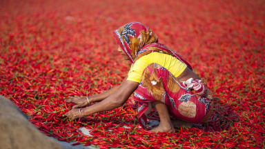 A woman in Bangladesh processes red chili peppers. Decent working conditions for all are one of the goals of Agenda 2030.